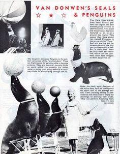 Van Donwen's Penguins & Seals