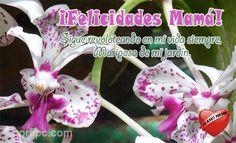 ¡Felicidades Mamá! Ojalá que sigas revoloteando en mi vida siempre, porque eres la mariposa de mi jardín. #DiaDeLaMadre
