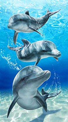 This is one of my favorite best quality beach towels.  I love the dolphins and the vivid shades of blue.  This is a really cool Baron bay dolphins velour brazilian beach towel 30x60 inches