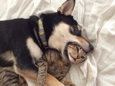 """Quasi amici! #quasiamici  """"Nel nostro linguaggio questo è un bacino... giuro!!""""   Leggi sul sito: http://bit.ly/29lYuWn"""