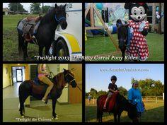 Twilight - Shetland pony