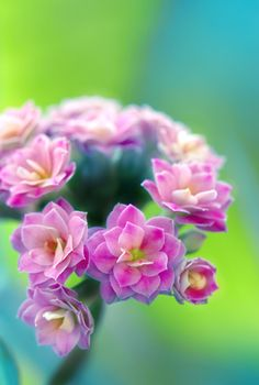 ~~a world apart | kalanchoe by sumahli~~