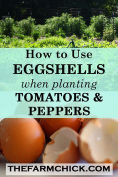 Learn how to make and use crushed eggshells in your garden to prevent blossom end rot in your tomatoes and peppers! #tomatoes #peppers #gardening #eggshellsinthegarden
