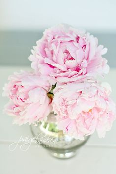 pink peonies wrapped canvas available http://paigeknudsen.com/the-canvas-shop/
