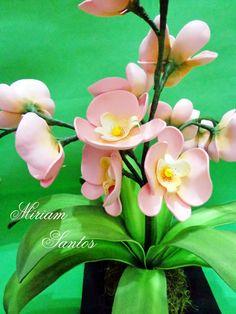 Flores de Mira: Orquídea de Eva - Sem Frisador