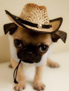 Howdy Partner !!!!