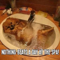 Haha I've never known a dog to enjoy their bath like this... Maybe he tried Mauro Pet Care Essential Elements Shampoo?