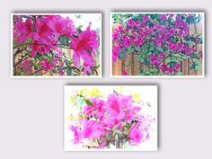 Pink Azaleas. 3 Note Card Note Set of Beautiful Blossoms. Delicate Photo Art on Premium Matte Note Cards. Hostess Gift. Mothers Day Gift. by VintageArtForLiving on Etsy https://www.etsy.com/listing/600293195/pink-azaleas-3-note-card-note-set-of