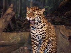 mz-5 Black Footed Cat, Milwaukee County, Siberian Tiger, Big Cats, Jaguar, Cubs, Panther, Thursday Morning, Interior Door