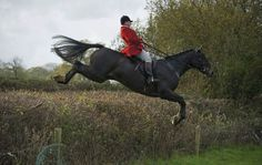 K K Horse Country Uk Ltd + images about Horse jumps on Pinterest | Cross country jumps, Horse ...
