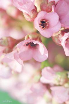 Ulchiva Macro Photo Flower Nature Spring Summer Color White Green Love Postcard