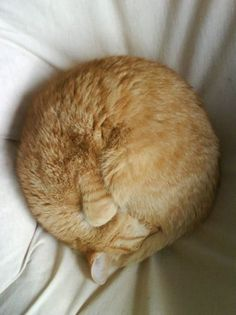 Cat ball - you can gauge the temperature by how a cat sleeps - wish I could do this when I'm cold