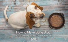 Bone Broth: A Comforting Superfood for Your Pets. Learn how to make this fantastic addition to your pet's diet from the DIY Dog Mom Queen, Jodi Chick.