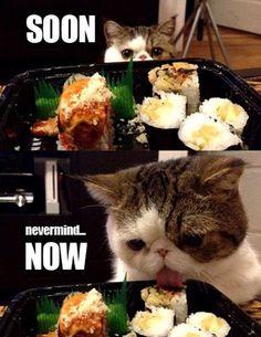 #cats