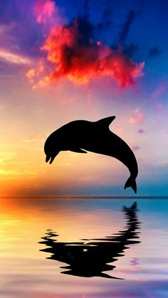 Dolphin jump, silhouette, ocean, water reflection, sunset
