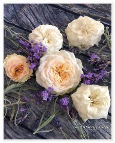 Rose,roses,lavanda,lavender,provence,countrychic,garden,giardino,gardening
