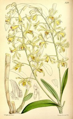 n32_w1150 by BioDivLibrary, via Flickr