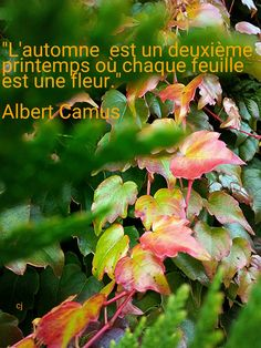 #citation #albert Camus #photo Caroline Julita
