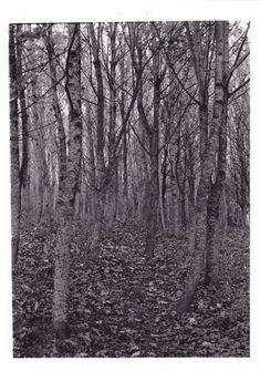 Poem 'Way through the woods' by Rudyard Kipling