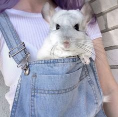 Image result for DRESSED UP CHINCHILLA'S