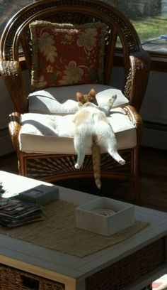 How I found my cat when I got home. Turns out she got into her treats and was in a food coma #catsfunnysayings