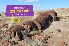 Arizona's Petrified Forest National Park  Many trees in Arizona's Petrified Forest National Park are about 218 million years old. Though they died long ago and