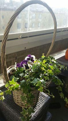 Parvekkeen kevätkukkia kirpoikseltä löydetyssä korissa.