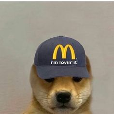 Funny Iphone Wallpaper, Cute Disney Wallpaper, Dog Wallpaper, Wallpaper Ideas, Doge, Hello Memes, Graffiti Wallpaper, Cute Memes, Funny Memes