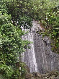 El Yunque National Forest  s a forest located in northeastern Puerto Rico. It is the only tropical rain forest in the United States National Forest System.