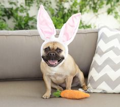 Cookie as an Easter bunny Cute Baby Pugs, Baby Dogs, Cute Babies, Adorable Dogs, Baby Bulldogs, French Bulldogs, English Bulldogs, Rosanna Pansino Nerdy Nummies, Animals And Pets