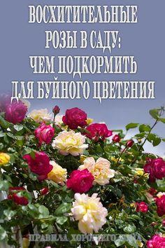 Diy Garden, Silk Flowers, Planting Flowers, Plants, Garden, Bougainvillea, Garden Trellis, Garden Decor, Flowers