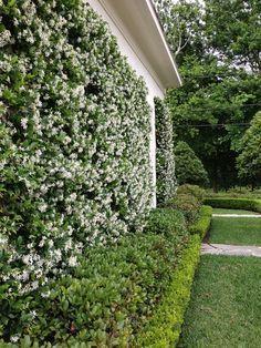 #Jardines verticales de jazmin www.digebis.com