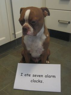 We don't like them either buddy... but we don't eat them ;)  #enddogshaming #APC  Only you can prevent dog shaming.