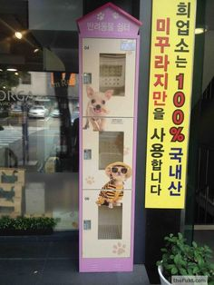 Korea: Put your pet in the box