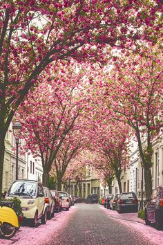 london in #blossom