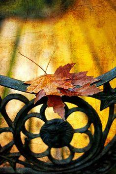 "by Grazyna Anna Kondracka ""Autumn Memories"""