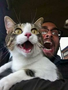 Surprised kitteh n his guy!