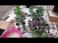 ÇİÇEKLERİ COŞTURAN EN İYİ YÖNTEM The best way to stimulate the flowers: With this method, my flowers no longer open, my flowers fade. Growing Flowers, Growing Plants, Herb Garden, Vegetable Garden, Pergola, Flower Decorations, Houseplants, Gardening Tips, Farmer
