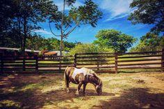 Quinta da Estância em Estância Grande, estado do Rio Grande do Sul, Brasil.  Fotografia: Omar Junior no Flickr.