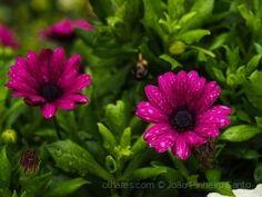 /Chuvas de Outono Plants, Autumn Rain, Pictures, Plant, Planets