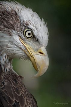 Photo by Linda Nature Animals, Animals And Pets, Cute Animals, Fishing Photography, Animal Photography, Beautiful Birds, Animals Beautiful, Eagle Drawing, Eagle Pictures