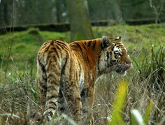 March 2015. Check out this amazing big cat photos from Charlotte Slade. Thank you so much for sharing them with us!