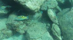 Martinique - Les Anses-d'Arlet - Plongée en apnée - Part. 2