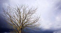 arbre, tree, gold, or, oror