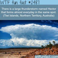 Hector thunderstorm, Tiwi Islands, Australia - WTF fun facts