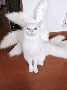 九尾の狐のコスプレ衣装を作っていたら、猫がやってきてなんだか神がかって見えてきたと話題に