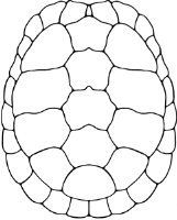 how to draw a turtle shell