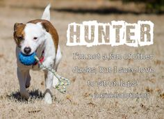 Today's featured Terrier mix rescue for adoption, foster or sponsorship - Hunter!