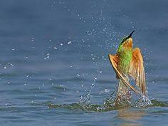 Jayakwadi Bird Sanctuary - Aurangabad, Maharashtra, India.