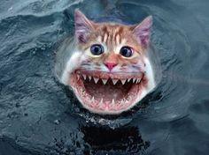 ... FOXTEL #Australian #tv #channel183 #Australia #fishing #fish #cat